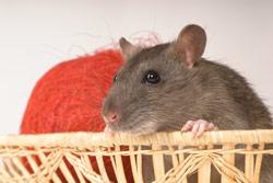 Fokuser På Din Modtager – Ikke Din Hamster